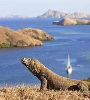 tips liburan ke pulau komodo